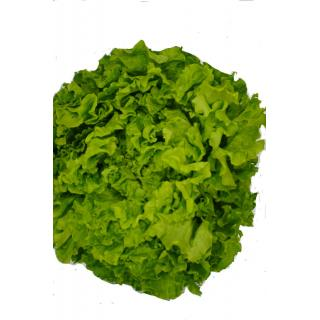 Batavia grün
